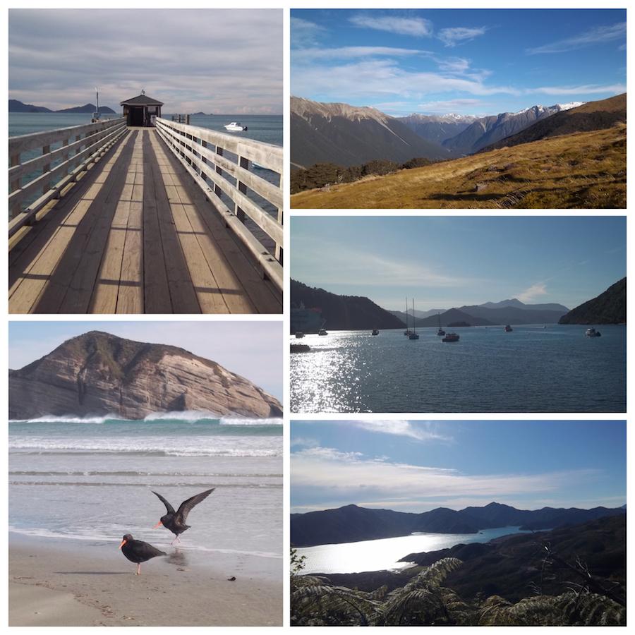 web_NZ