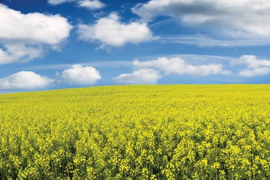 Agroseguros en República Argentina